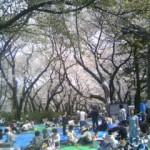 井の頭公園の花見の賑わい