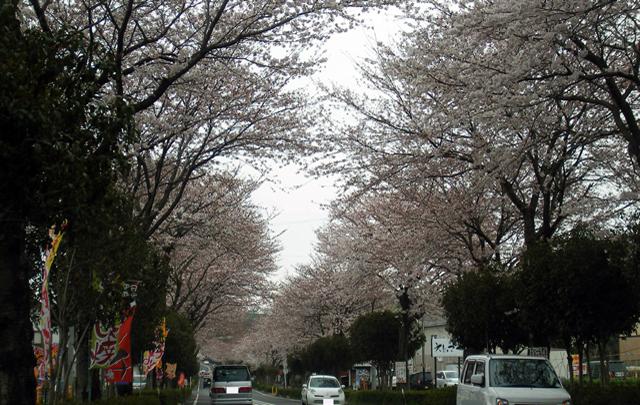 Vol.12「桜賑わうころ」  (2009.4.5:神奈川県秦野市)