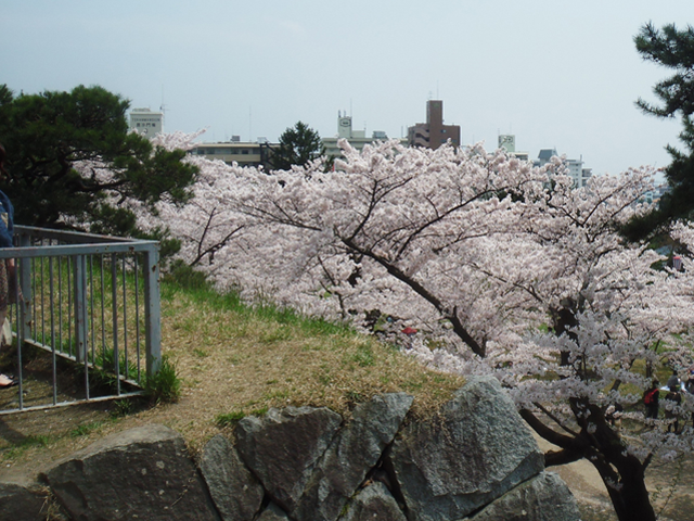 Vol.3 盛岡城の桜(岩手県盛岡市) 2010.05