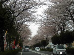Vol.12「桜賑わうころ」<br />  (2009.4.5:神奈川県秦野市)